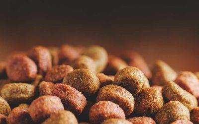 Nutrição animal: vantagens em implantar um sistema de transporte pneumático